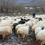 una donna accudisce le sue pecore nei pressi dello sperduto villaggio di Tabatskuri sul Caucaso Centrale a woman looks after his sheep near the remote village of Tabatskuri Caucasus Central ph © Nicola De Marinis
