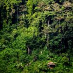 un tratto di giungla nella periferia di yaounde sul mont febè