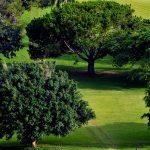 caddy nel campo da golf presso l'hotel mont febè ia yaoundè