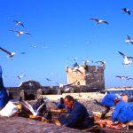 Marocco, pescatori al porticciolo di Essaouria
