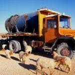 Algeria, un camion rifornisce l'acqua ad un gregge nei pressi di In Guezzam