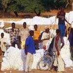 Niger, operai addetti alla raccolta del cotone nei pressi di Dasso