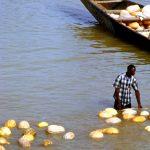 Niger, trasporto fluviale delle zucche sul fiume Niger a Niamey