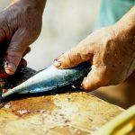 Croazia isola di Pag un pescatore sfiletta del pesce