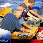 Croazia Isola di Pag, pescatori al lavoro a Mandre