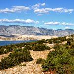 europa, croazia, vegetazione mediterranea sull'isola di pag