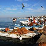 Croazia Isola di Pag Pescatori al lavoro sul molo del porto di Novalja