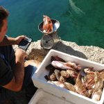 Europa, croazia, un pescatore che vende pesce appena pescato nel porto del villaggio di Mandre sull'isola di Pag