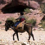 jordan, petra, children in the back of a mule