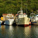 Europe, Italy, Sardinia, the fishing harbor in Santa Teresa di Gallura