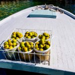 figs loaded on a boat zverinak ready for transport on the island of Dugi Otok in Bozava