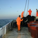 europe, croatia, fishermen at work at dawn and pulled on board the vessel networks