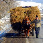 Romania, un uomo con il suo carretto carico di fieno, fa ritorno al villaggio | Romania, a man with his truck load of hay, returns to the village