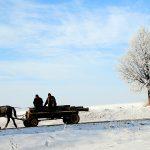 Romania, uomini con carretto nelle campagne nei pressi di Suaceva in inverno