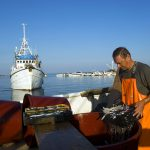 urope, Croatia, Island of Pag, Novalja harbor, fisherman at work while preparing the tapes with the fish caught during the night