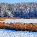 Romania, un lago ghiacciato nei pressi di Suaceva | Romania, a frozen lake around Suaceva