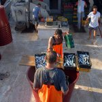 europe, croatia, fishermen at work on the vessel while preparing the fish boxes with charges to the port of the island of Pag Novalja