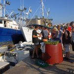 Europe, Croatia, island of Pag, fishermen sell the fish at the port of Novalja